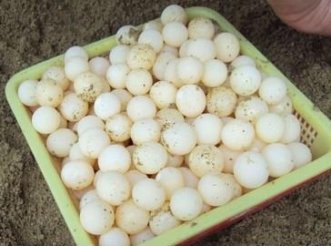 找收购甲鱼蛋网上平台就上中国惠农网