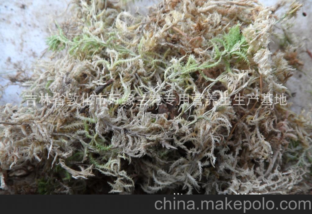 供应无土栽培 国兰 洋兰 蓝莓专用优质长白山水苔
