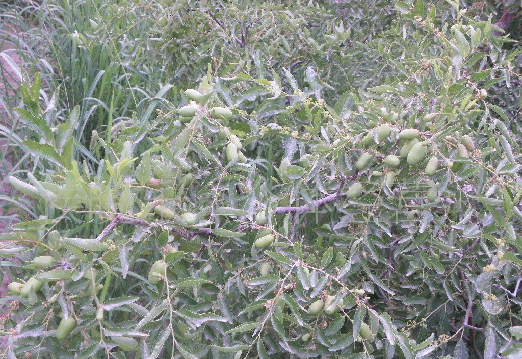 供应新疆红枣 优质红枣 若羌三级红枣 500g(图)