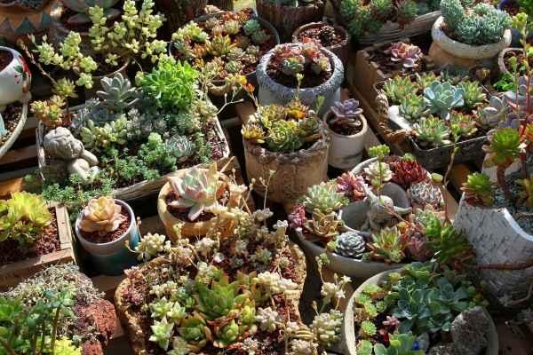 西安花卉绿植公司
