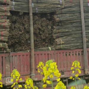 江西2米5-3米菜架竹 架菜竹 竹架条 竹架材 竹架竿