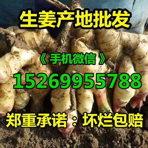 山东生姜产地大黄姜 小黄姜 姜种 老姜 货源充足 质量保证