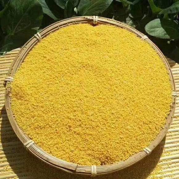 2017年陕北黄小米香谷小米农家新小米粥包邮小黄米新米佳县小米月子米