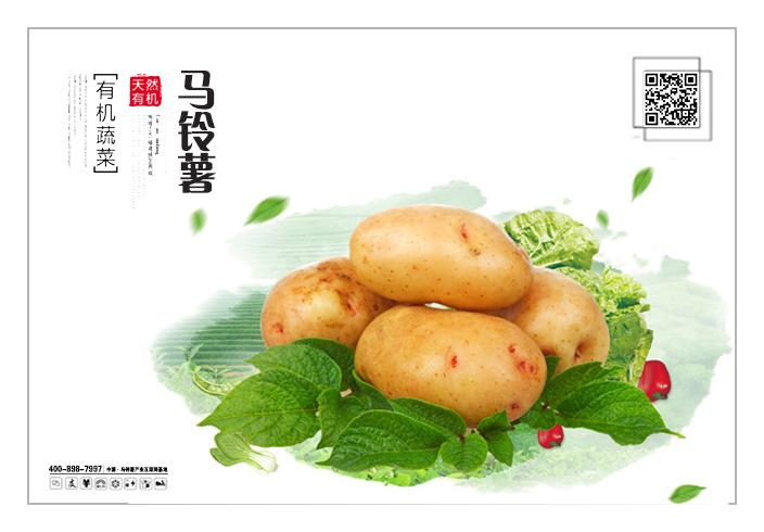 马铃薯05