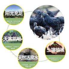 略阳生态乌鸡林间散养土鸡乌鸡批发产地直供量大从优鸡