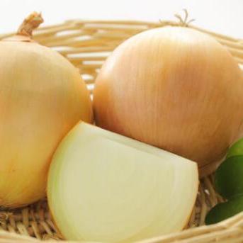 供应农家产品自种黄洋葱头圆葱