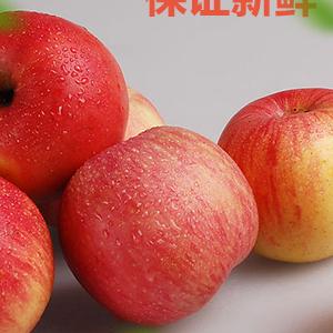 辽西天然特产农家寒富苹果果径75--80脆甜可口营养丰富老少皆宜送礼的不二之选