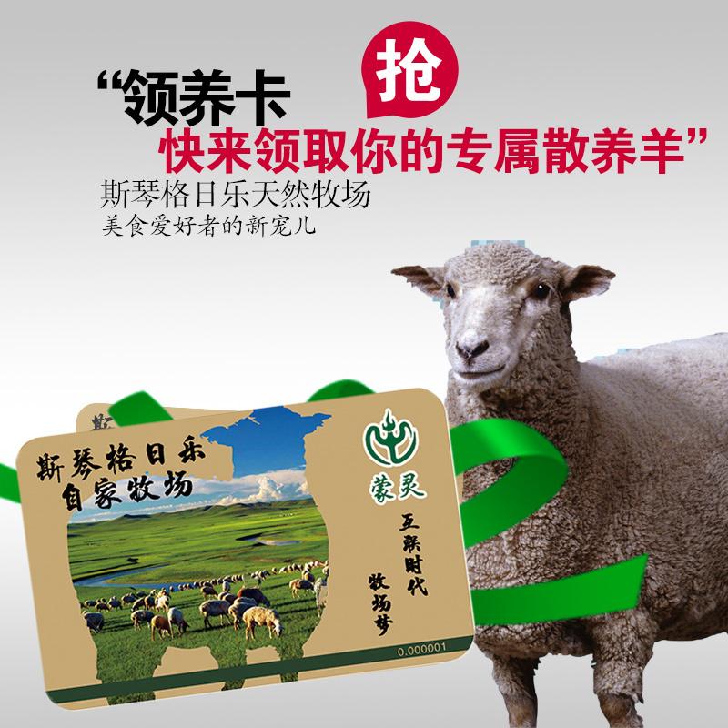 自家牧场领养草原散养羊