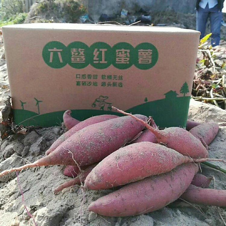【爆款】福建六鳌红蜜薯 5斤约7-15个 29.9元每箱包邮