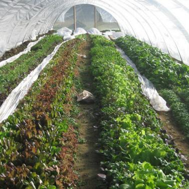 白色透明农用薄膜 长寿无滴pe大棚膜
