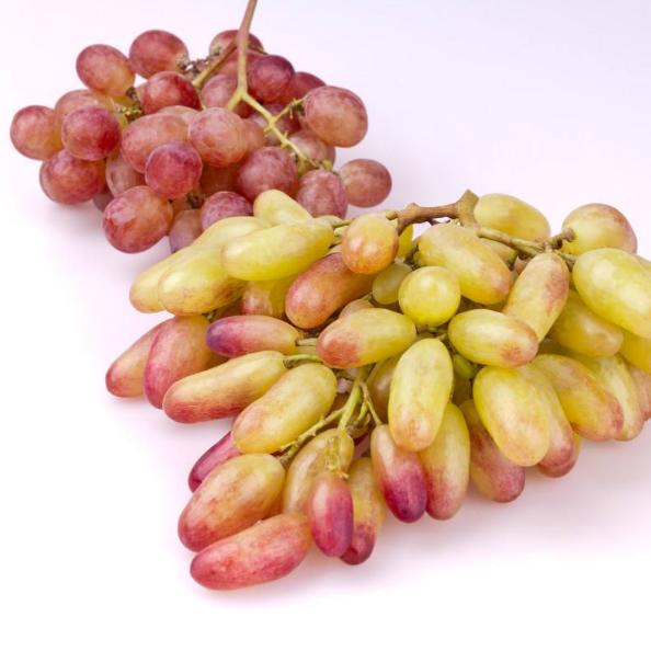 贵州绥阳金色阳光美人指  葡萄 新鲜水果 现摘现发