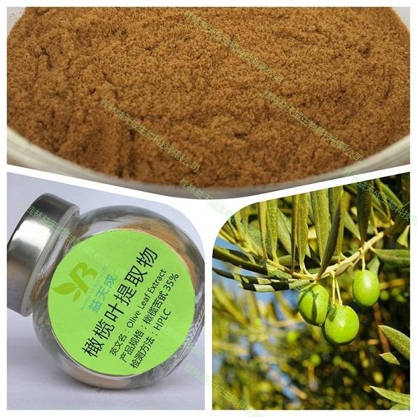 桂林益天成生物橄榄叶提取物qiangji酪醇5%-40%