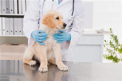 宠物医院、贝贝宠物俱乐部、西安动物医院