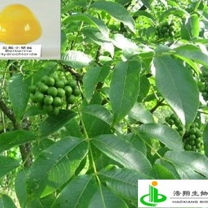 盐酸小檗碱(黄连藤)
