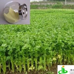 芹菜素98%(旱芹菜(脱水芹菜 洋甘菊活性植物提取物))
