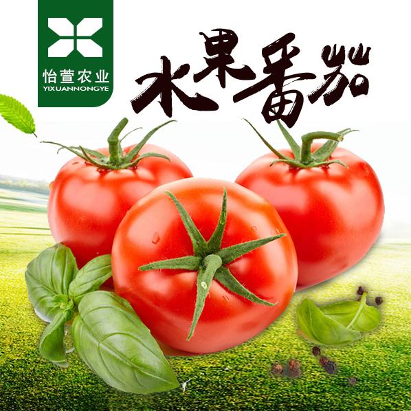 【预售】怡萱农业  水果番茄   普罗旺斯番茄16枚装   2000g